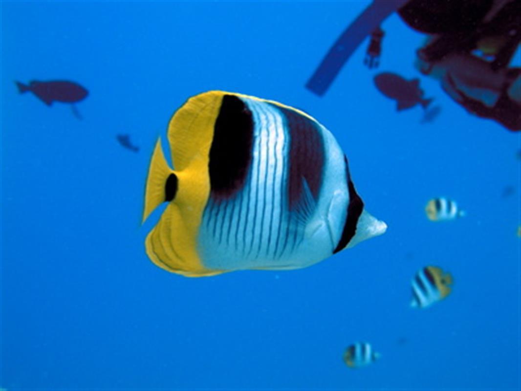 Aquarium de la rochelle a visiter dans le poitou for O miroir la rochelle